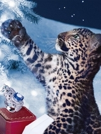 Cartier Winter Tales Holiday 2012 Ad Campaign