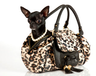 Carrying Your Dog In Bag