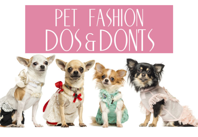 DOs and DON'Ts of Pet Fashion