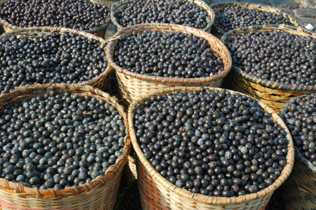 Benefits of Acai Berry Diet
