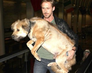 Ryan Gosling Dog