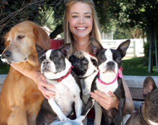 Denise Richards Pug And Dogs