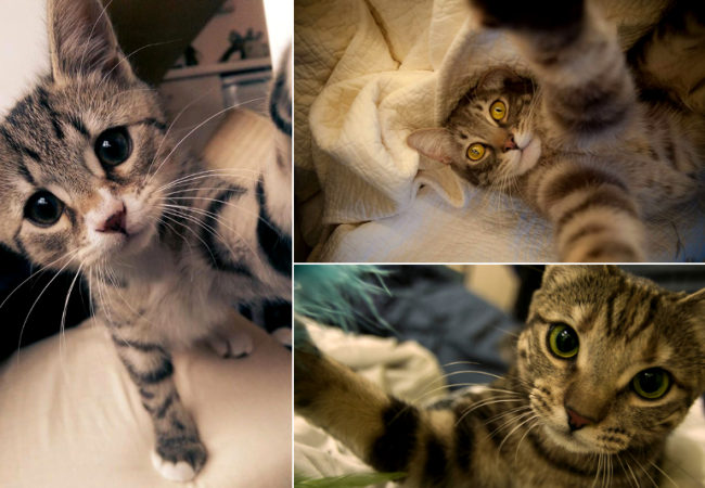 10 Selfie Tricks You Can Learn From Cats